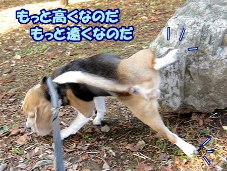 3_20121124185741.jpg
