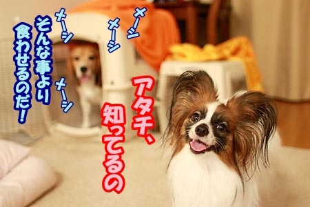 4_20120828210712.jpg