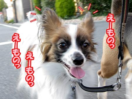 4_20121124185741.jpg
