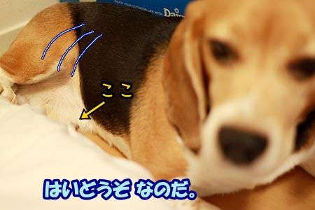5_20120829160131.jpg