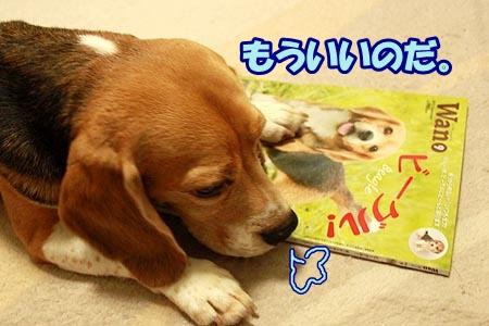 7_20120813230628.jpg