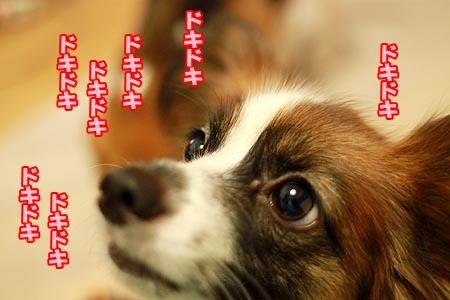 8_20120905200935.jpg