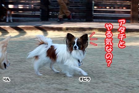 9_20130113231750.jpg