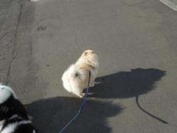 平社員のお散歩
