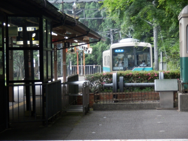 P6030352 (600x450)