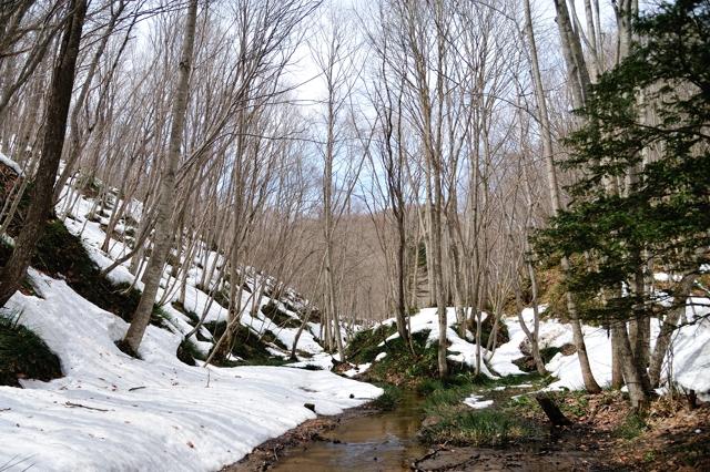 雪解けの森