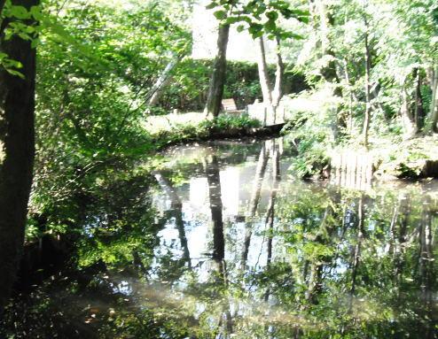 実篤公園下の池