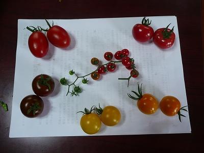 カラフルミニトマト大集合