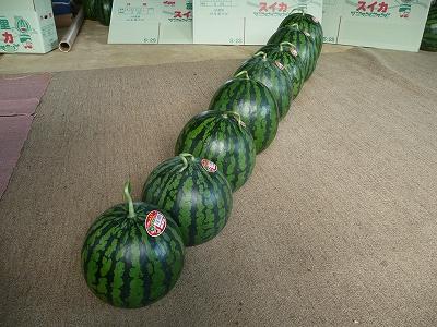 並べた西瓜 その1