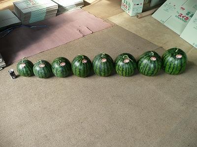 並べた西瓜 その3