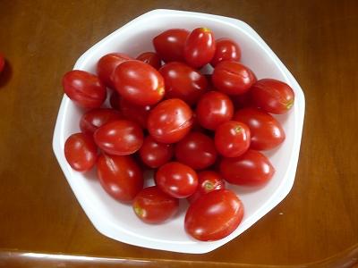 トマトソースになるシシリアンルージュ