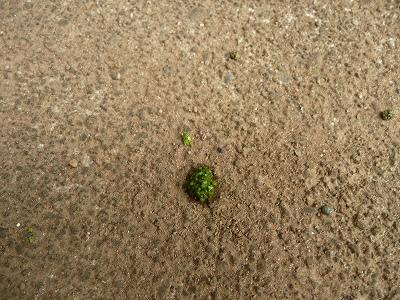 みかんの木の下に落ちている謎の物体