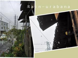 よぉ~降る雨です事 (@ @;