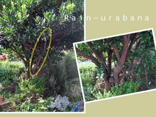 まずはこの枝から...結構、太(@ @;