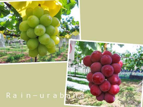 緑のブドウ&赤のブドウ♪