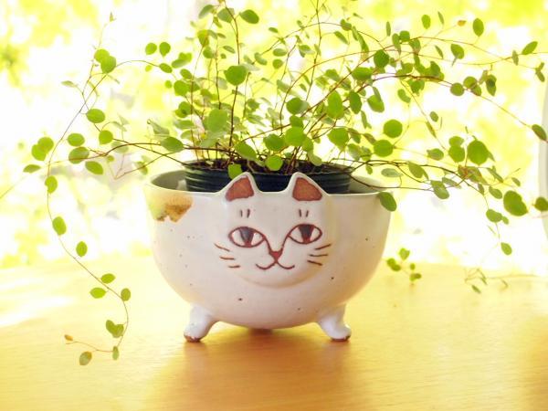 ネコ植木鉢
