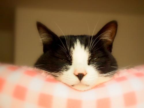 ピンクのベッドで目をつぶるジロー