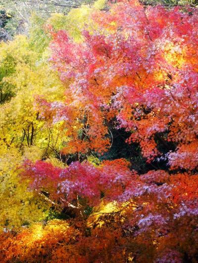 三浦渓谷の紅葉