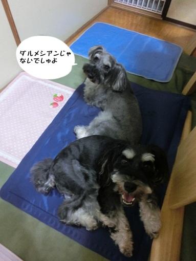 CIMG4785よっちゃん