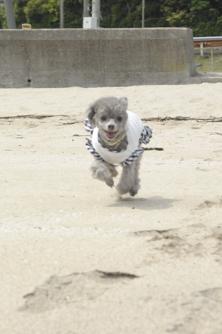 10浜辺で走るdiana