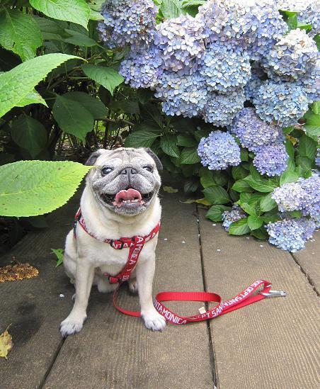 ちょっと涼しかった日、紫陽花はもう終わってたけど・・・