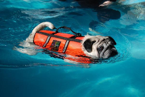 一生懸命泳いでいます・・・