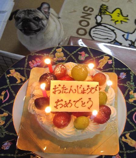 かあたんのお誕生ケーキ、チッチ大興奮!