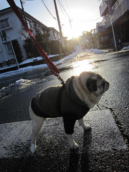 散歩してまっせ~(^O^)