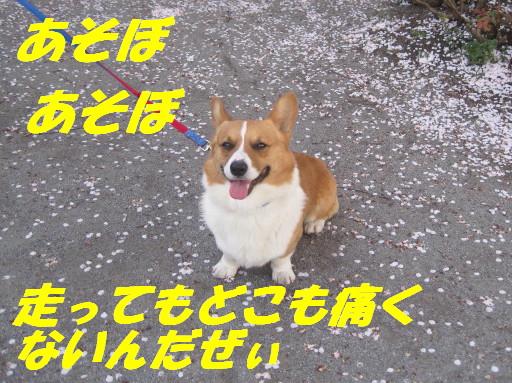 IMG_5533_20120508235038.jpg