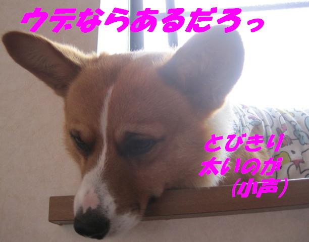 IMG_6053_20120626225736.jpg