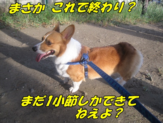 IMG_6532.jpg