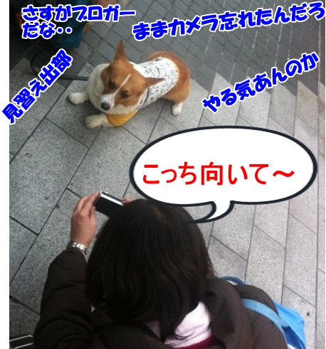 IMG_6594_20121221230333.jpg
