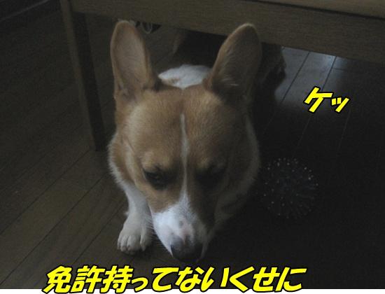 IMG_6881.jpg