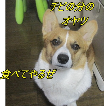 IMG_6889.jpg