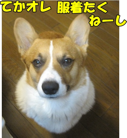 IMG_7013.jpg