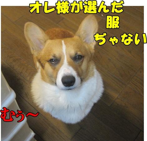 IMG_7014.jpg