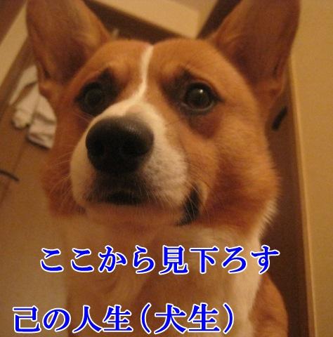 IMG_7024_20121112003013.jpg