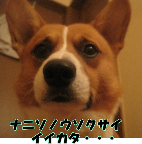 IMG_7025.jpg