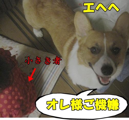 IMG_7027.jpg