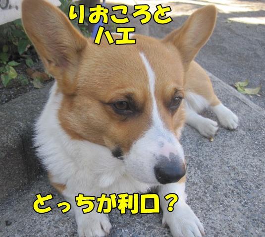 IMG_7094.jpg