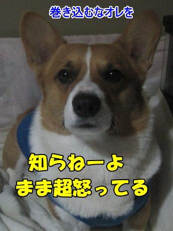 IMG_7266.jpg
