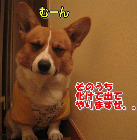 IMG_7582.jpg