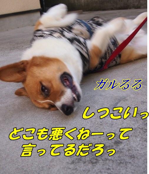 P8023653_20121014000601.jpg