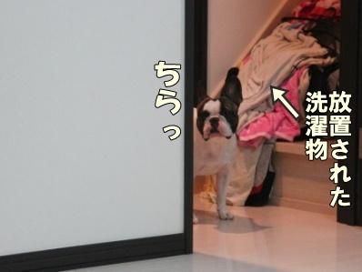 1-1_20121102171047.jpg