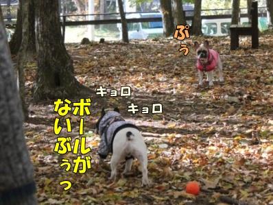 10-1_20121108110124.jpg