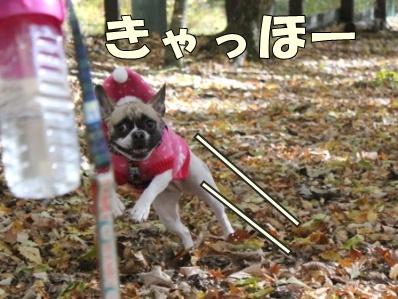 11-1_20121108110124.jpg
