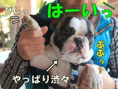11-1_20121113113940.jpg