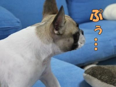 11-1_20121114110912.jpg