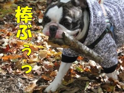 12-1_20121108110124.jpg