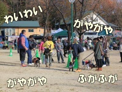 16-1_20121126171028.jpg
